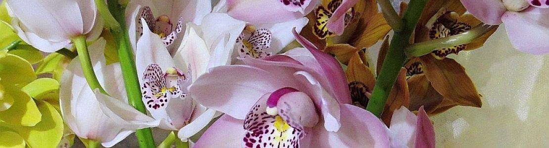 Cymbidium mini Pink.jpg