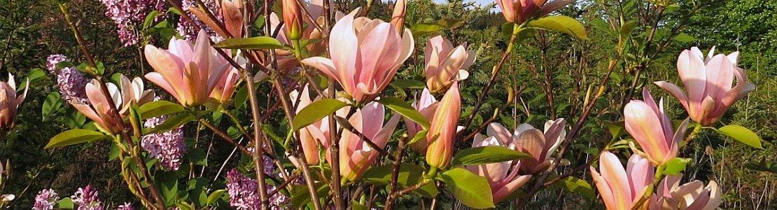 Magnolia Coral Lake 02.jpg